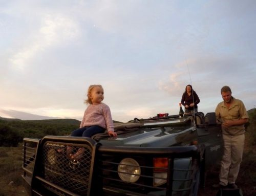 Overnight safari with a toddler