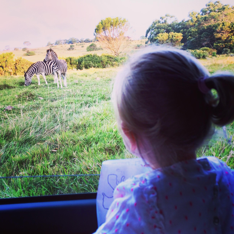 Kragga Kamma Safari Park