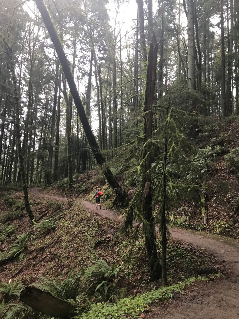 Forest Park Portland - things to do in portland oregon