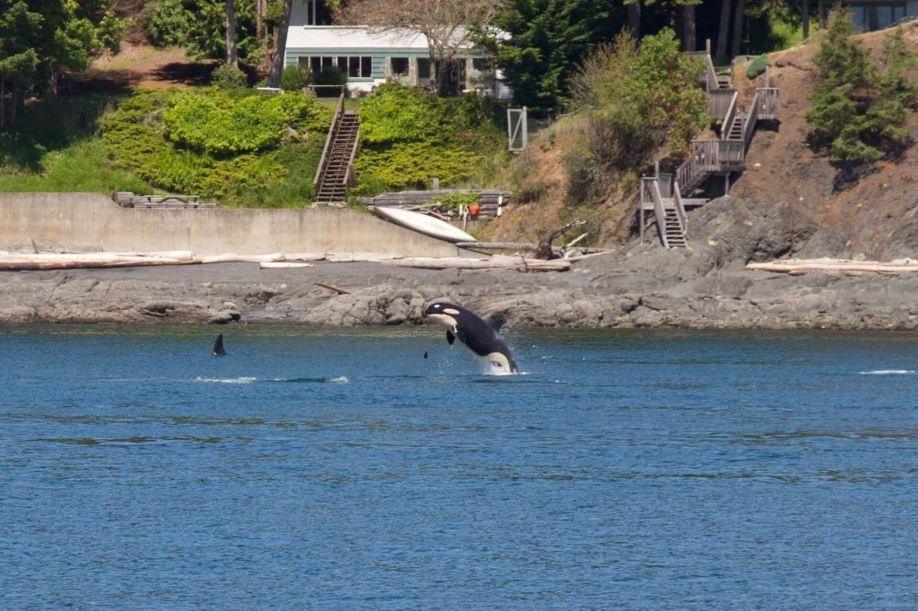 Outdoor Activities Seattle - Whale Watching