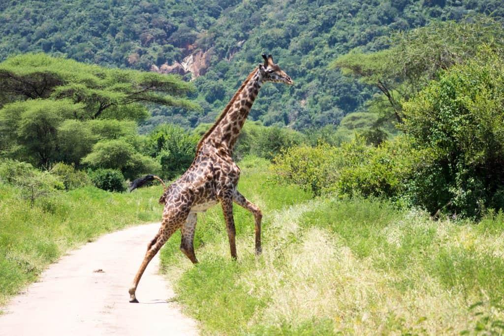 Tanzania safari with kids