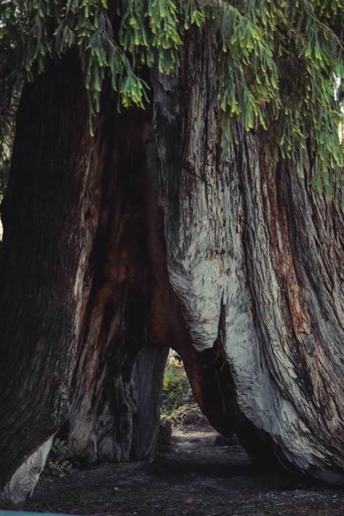 Best things to do in Redwood National Park with kids