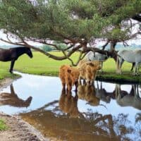 new forest for kids