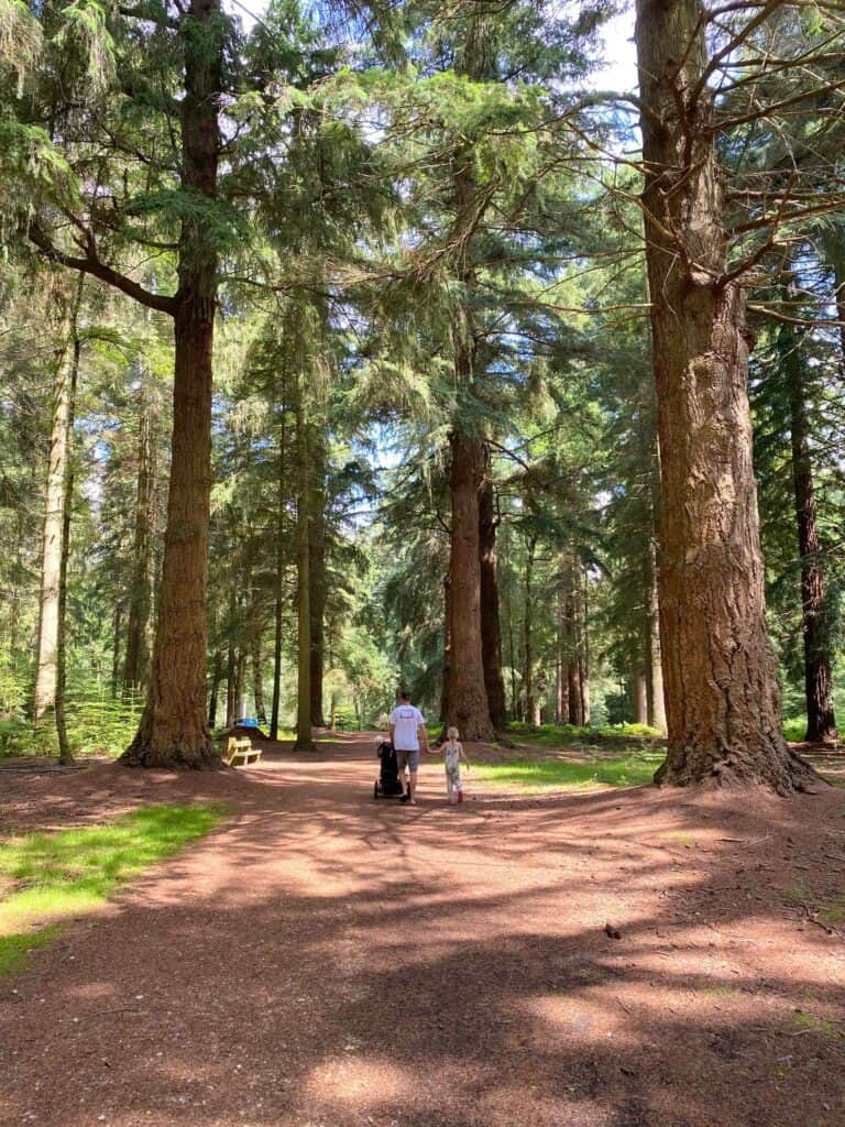 new forest with children