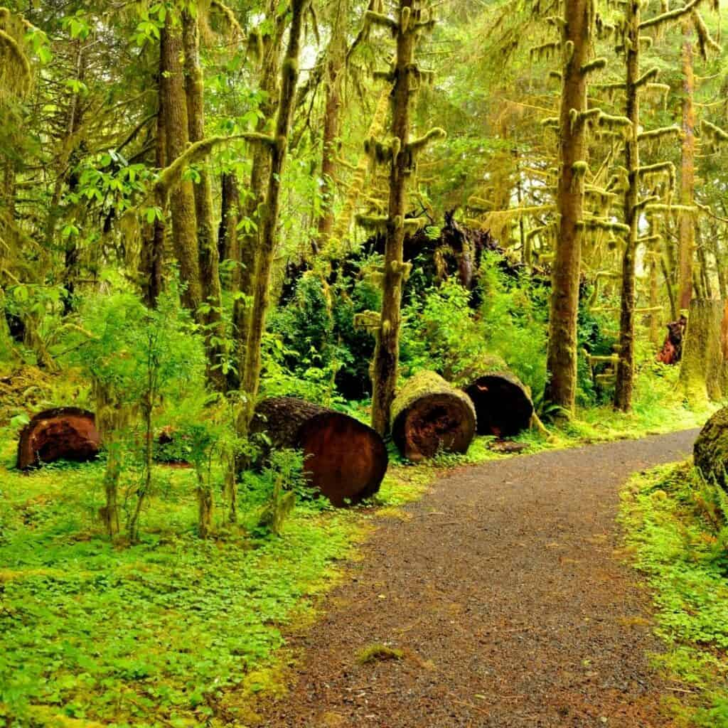 Olympic National Park Itinerary